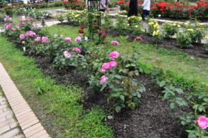 庄堺公園バラ